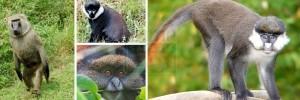 Nyungwe-forest-wildllife