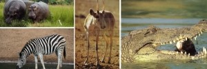 akagera-wildlife
