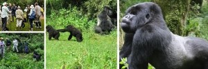 virunga-gorilla-trekking